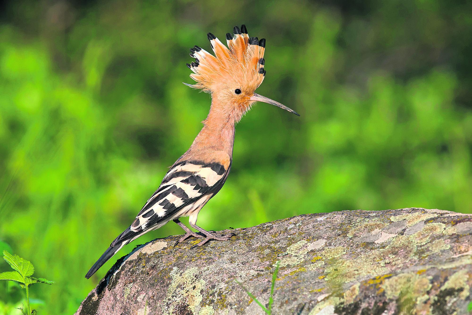 Le courrier comment se portent nos oiseaux for Se portent pour saluer